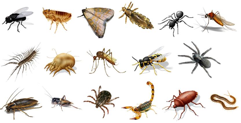 Infecciones transmitidas por artrópodos