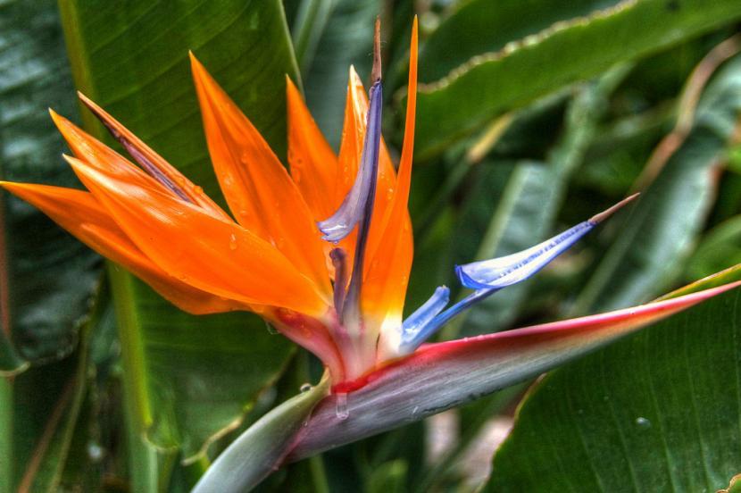 Flores más comunes durante la primavera