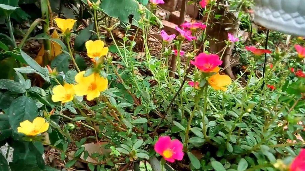Flores más comunes durante el verano