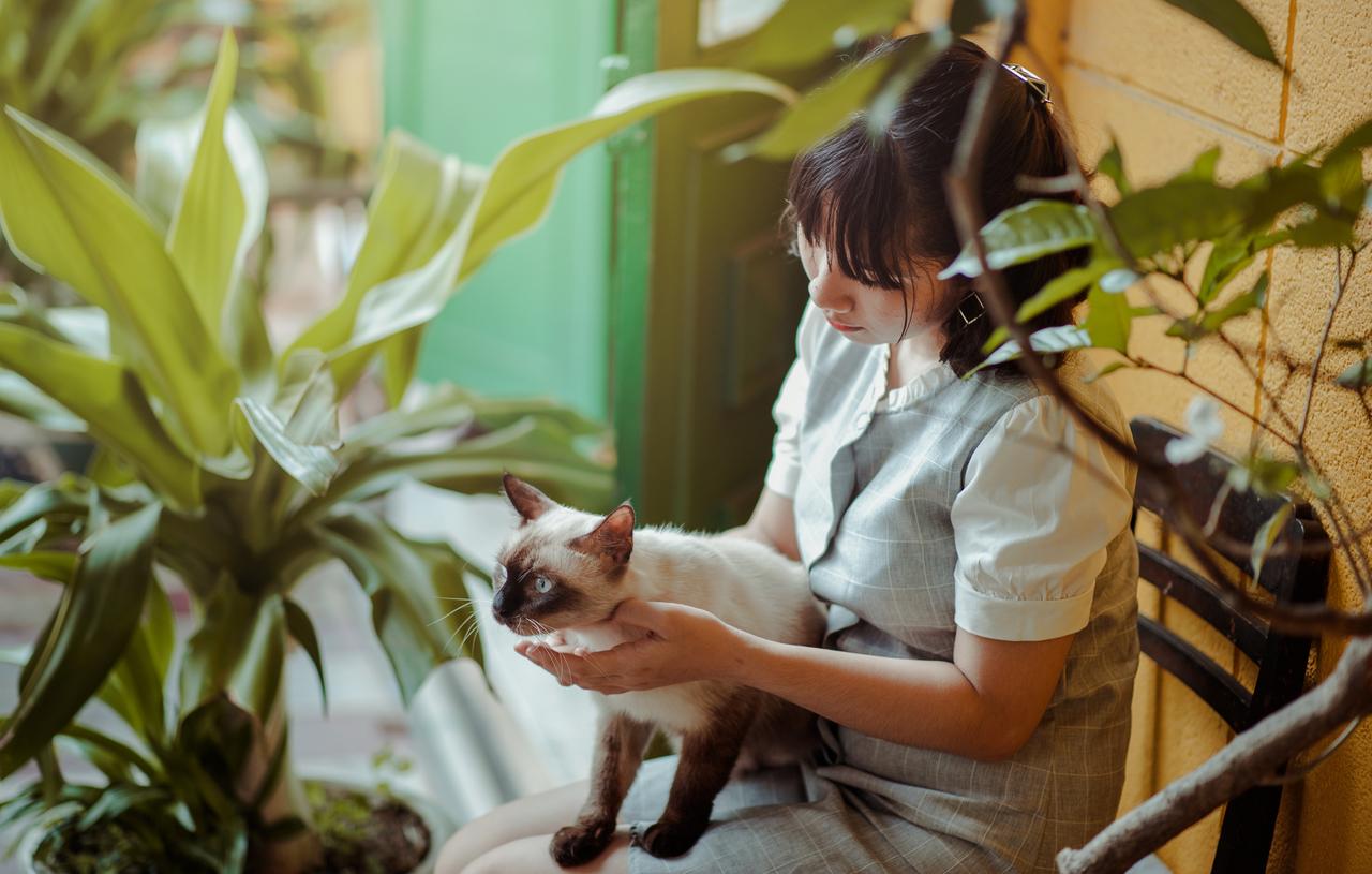 gato consentido