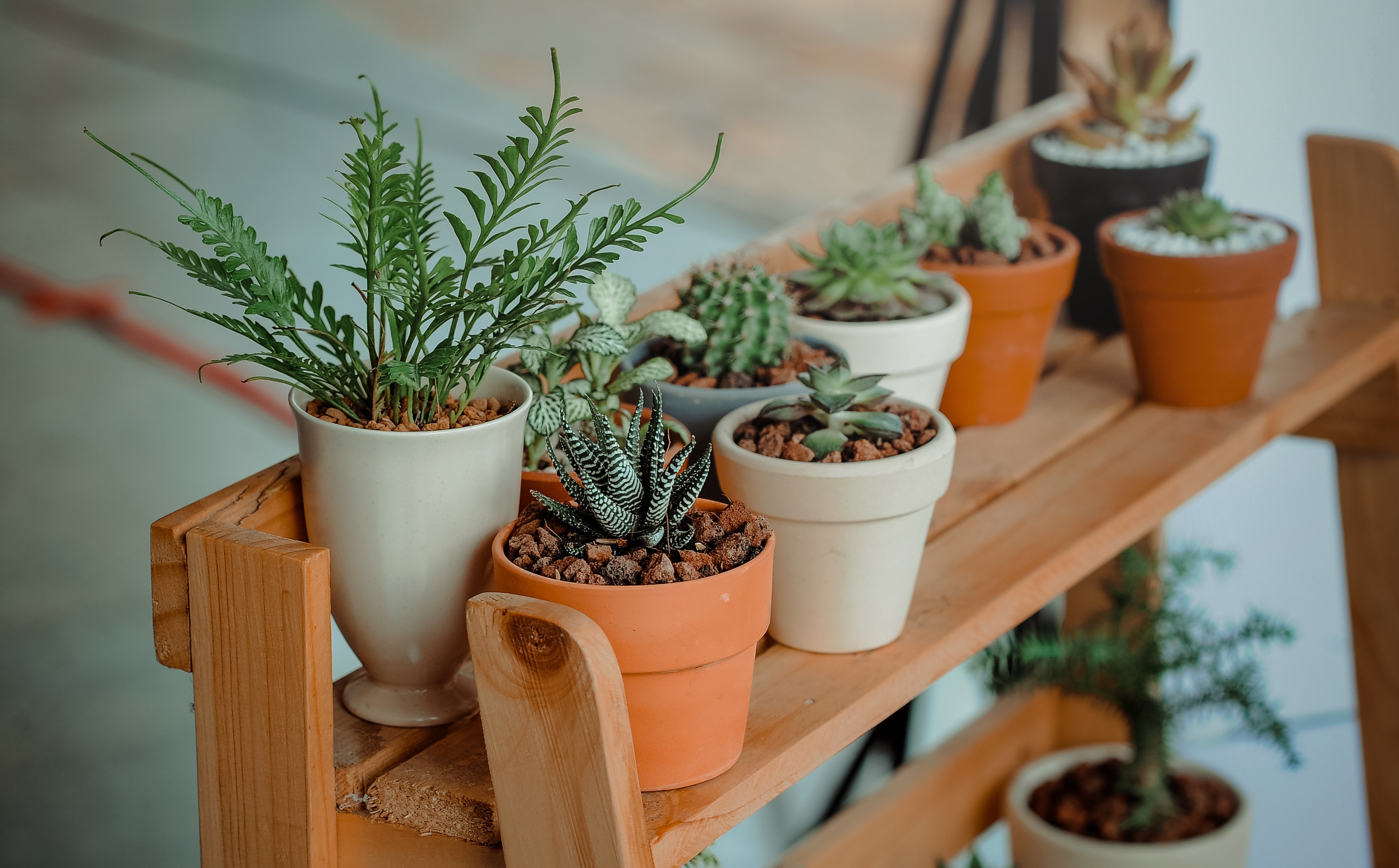 Plantas en lugar pequeño