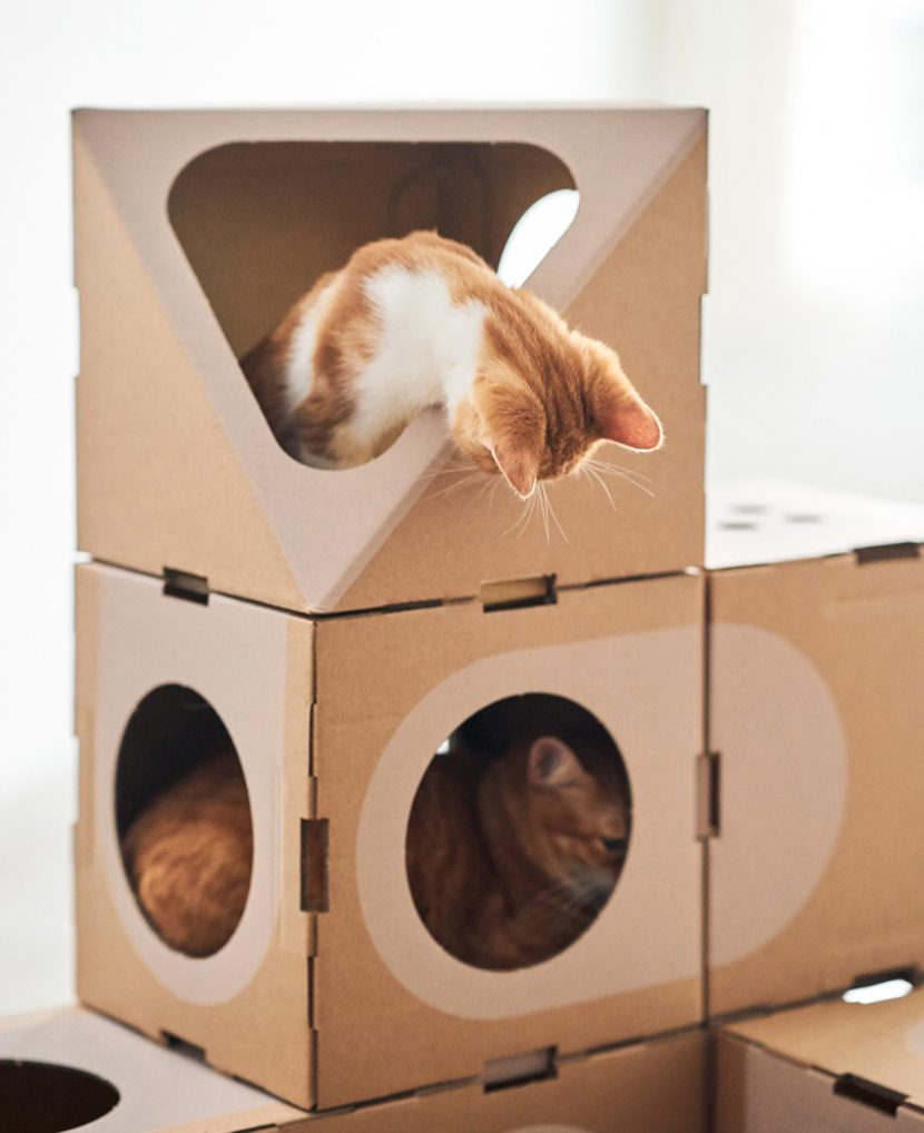 Ideas de regalos para gatos