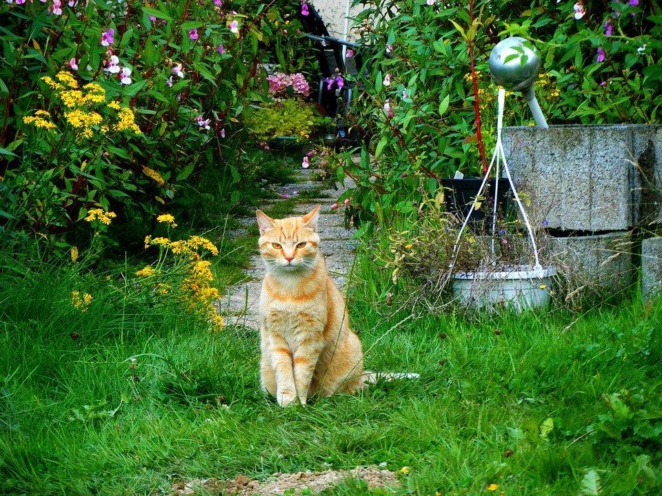 Gatos defequen en el jardín